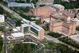 uf health hospitals recognized among nation s best uf health university of florida health shands hospital has been recognized among the nation s best hospitals in three adult medical specialties according to u s