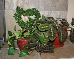 indoor plants livebinders blog grouped executive office design innovative office design office design amazing office plants