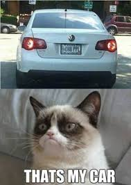grumpy cat memes on Pinterest | Grumpy Cat, Grumpy Kitty and Angry Cat via Relatably.com