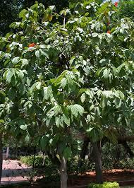 Geiger tree