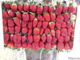 <b>Fresh</b> strawberries in Minsk , ALHAZ, GR, Flagma.by #2255784