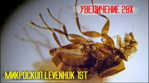Обзор Стереомикроскопа <b>Levenhuk 1ST</b> - YouTube