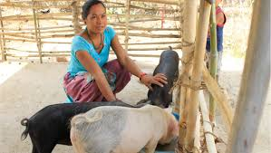 youth foundation after gaining her dom she enrolled in nyf s vocational training program to become a pig farmer