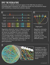 The <b>dark side of the</b> human genome | Nature