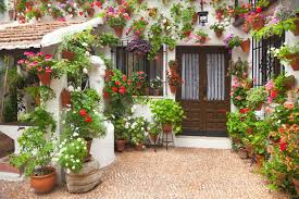 patio potted flowers plants patio and containers  m patio and containers