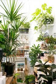 The Zen <b>Succulent</b>   Durham's Neighborhood Plant & Gift ShopThe ...
