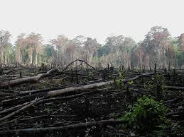 deforestation simple english the encyclopedia