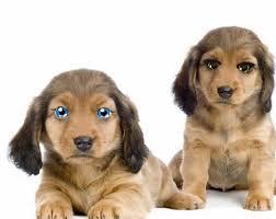 """Résultat de recherche d'images pour """"gifs chiens et chats pour Paques"""""""