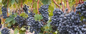 <b>Octagon</b> | Barboursville Vineyards