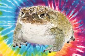 The hottest new psychedelic drug is illegal <b>toad venom</b>