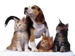 Resultado de imagen para fotos de muchos perros y gatos juntos