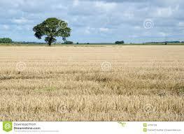 Resultado de imagen de imagenes campo solitario