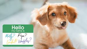 Top 101 <b>Cute Dog</b> Names for Your New Dog in 2019