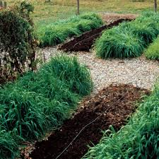 Healthy Soil Is <b>Just a Cover</b> Crop Away - FineGardening