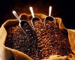 Resultado de imagen de imagenes de granos de cafe