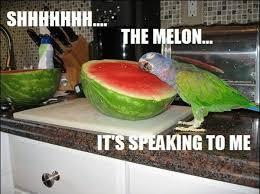 30 funny animal captions - part 2 (30 pics) ~ I Love Funny Animal ... via Relatably.com
