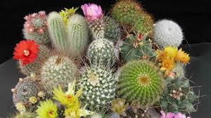 Resultado de imagen para jardineria en miniatura