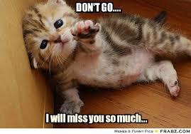 Memes Vault Miss You Cat Memes via Relatably.com