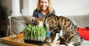 Can You <b>Smoke</b> Catnip? What Happens, Risks, and More