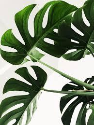 <b>green leaves</b> photo – Free Image on Unsplash