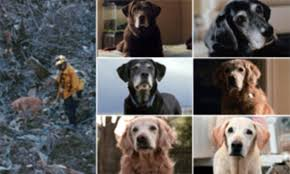 Surviving 9/11 rescue dogs that scoured Ground Zero for bodies are ...