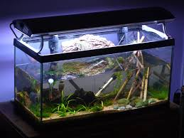 Aquarium <b>Thermometer</b> Pros and Cons