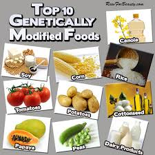 essay about genetically modified crops examples  essay for you  essay about genetically modified crops examples  image