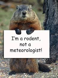 Image result for it's groundhog day