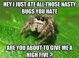 Ok, cure me please: SPIDERS! - Page 5 Images?q=tbn:ANd9GcR1XgqaTRt-C41c4j43n1Wy4lqajij3vDW-I5vufxaOBVm1zX7B