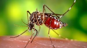 Image result for dengue task force