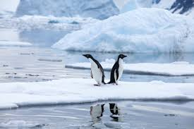 stunning antarctica a photo essay annual adventure two penguins back to back