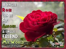 Image result for google/images of single Rose