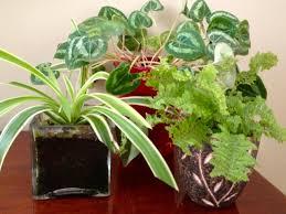 overwintering houseplants best office plants no sunlight