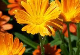 27 Types of <b>Orange Flowers</b> - ProFlowers Blog