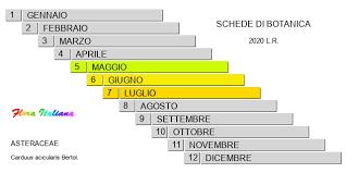 Carduus acicularis [Cardo con squame aghiformi] - Flora Italiana