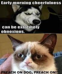 Grumpy Cat on Pinterest | Grumpy Cat Quotes, Grumpy Cat Meme and ... via Relatably.com