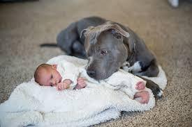 Resultat d'imatges de razas de perros peligrosos