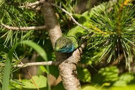 Emerald <b>Green</b> Фото - Скачать бесплатные изображения - Pixabay