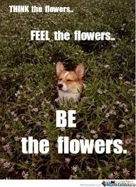 Flower Memes. Best Collection of Funny Flower Pictures via Relatably.com
