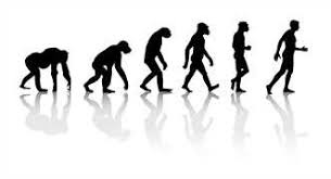 evolution of man essayfree evolution of man essay   example essays free evolution papers  essays