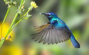 Image result for burung terbang