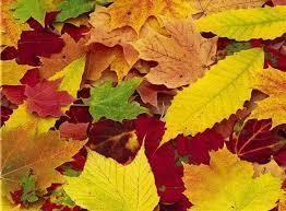 Risultati immagini per foglie rosse gialle