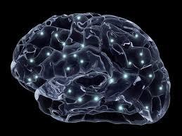 Los expertos identifican neurotóxicos que afectan a las neuronas