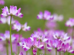 Astragalus - DrWeil.com
