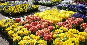 Bildresultat för blommor på torget