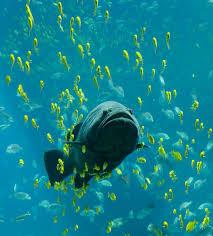 <b>Fish</b> - Wikipedia
