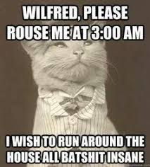 Love this cat meme | Animals | Pinterest | Cat Memes, Meme and Cats via Relatably.com