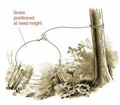 Image result for snare