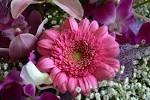 Kukkakauppoja - Koti - Kukka, Kukkakauppa, Kukat, Kukkakaupat