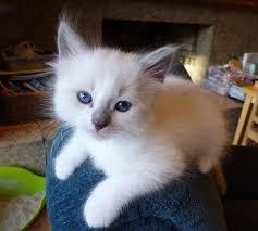 <b>Kitten</b> - Wikipedia